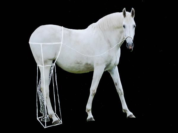 Paardenbeen_klein_0692