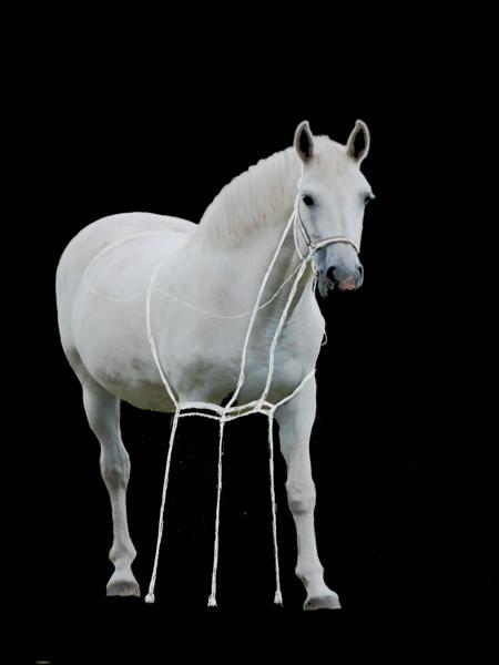 Paardenbeen_klein_0696